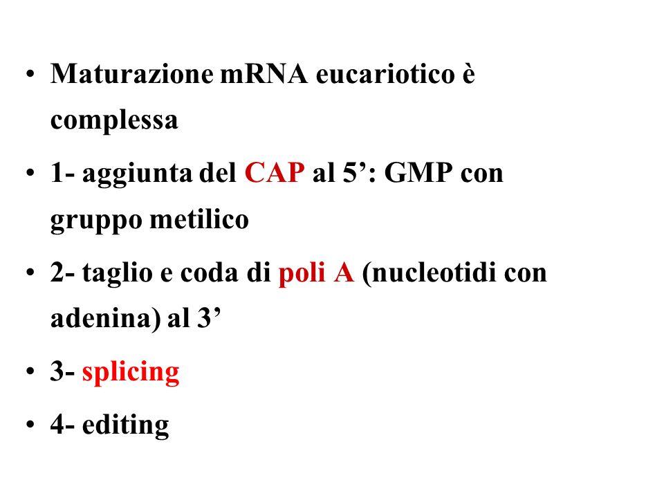 Maturazione mRNA eucariotico è complessa