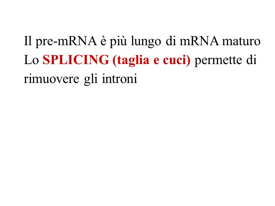 Il pre-mRNA è più lungo di mRNA maturo