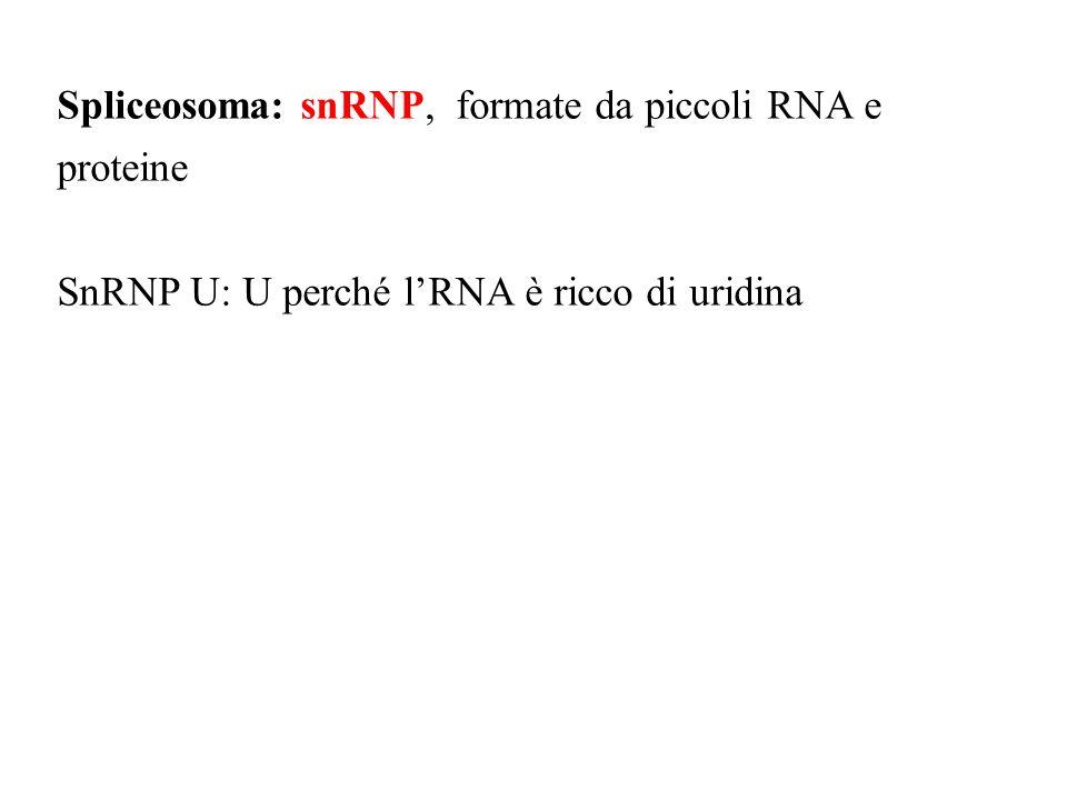 Spliceosoma: snRNP, formate da piccoli RNA e proteine