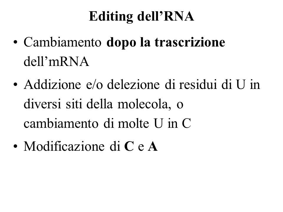 Editing dell'RNA Cambiamento dopo la trascrizione dell'mRNA.