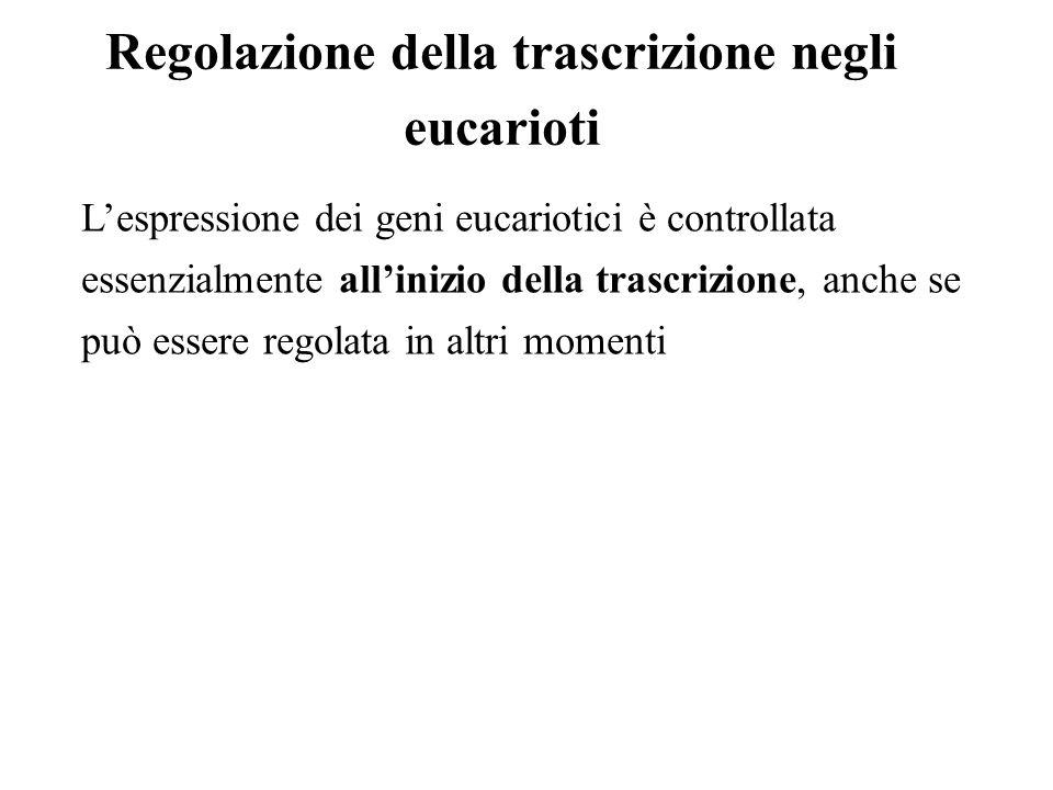Regolazione della trascrizione negli eucarioti