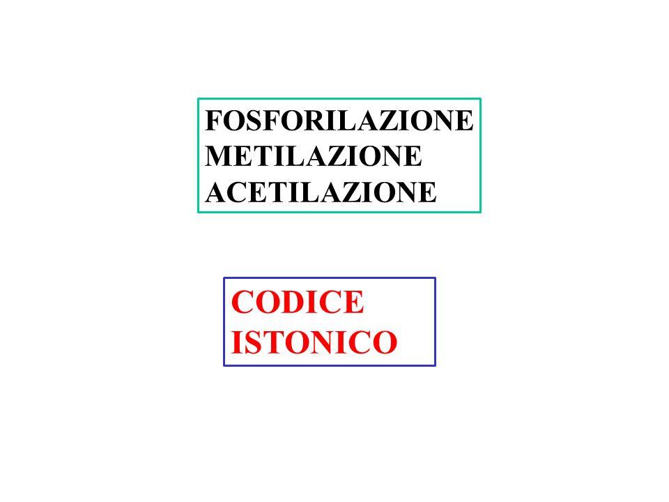 FOSFORILAZIONE METILAZIONE ACETILAZIONE CODICE ISTONICO