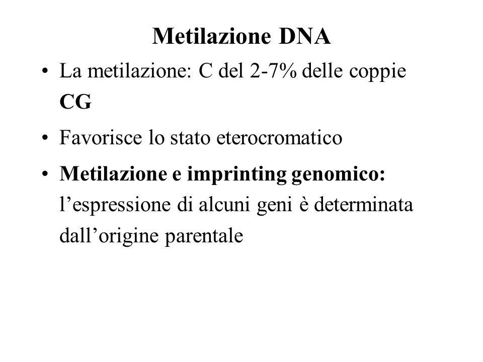 Metilazione DNA La metilazione: C del 2-7% delle coppie CG