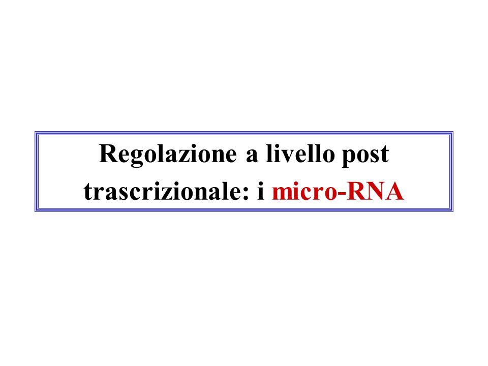 Regolazione a livello post trascrizionale: i micro-RNA