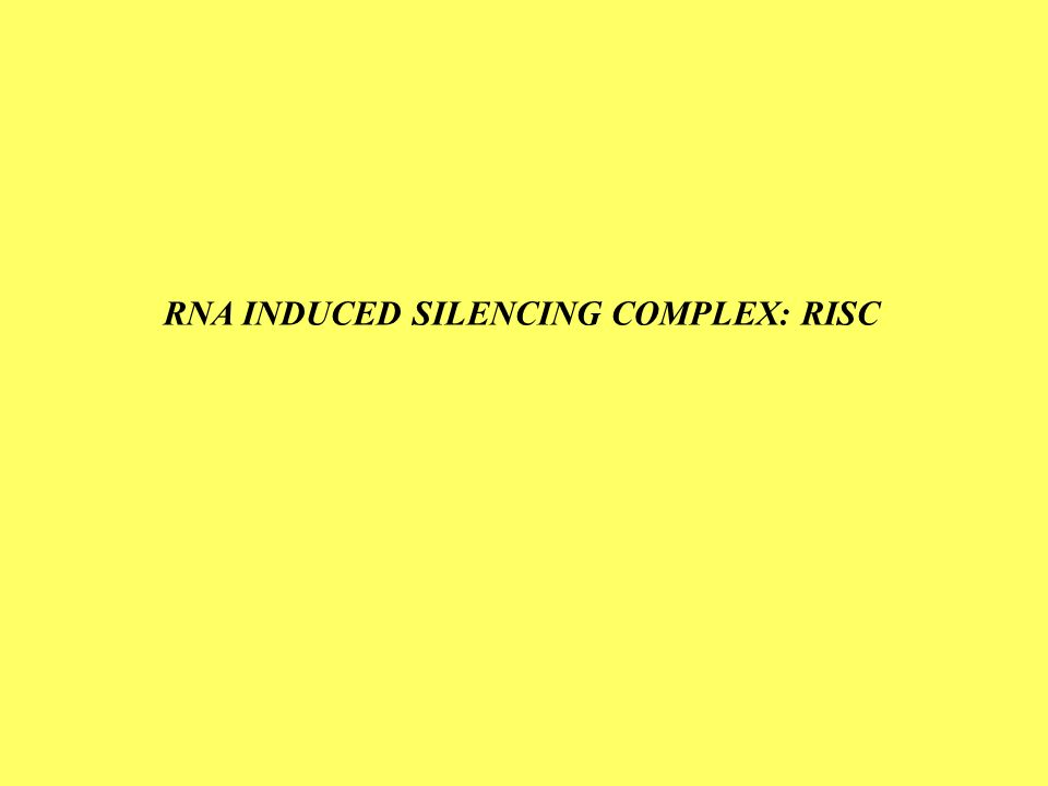 RNA INDUCED SILENCING COMPLEX: RISC