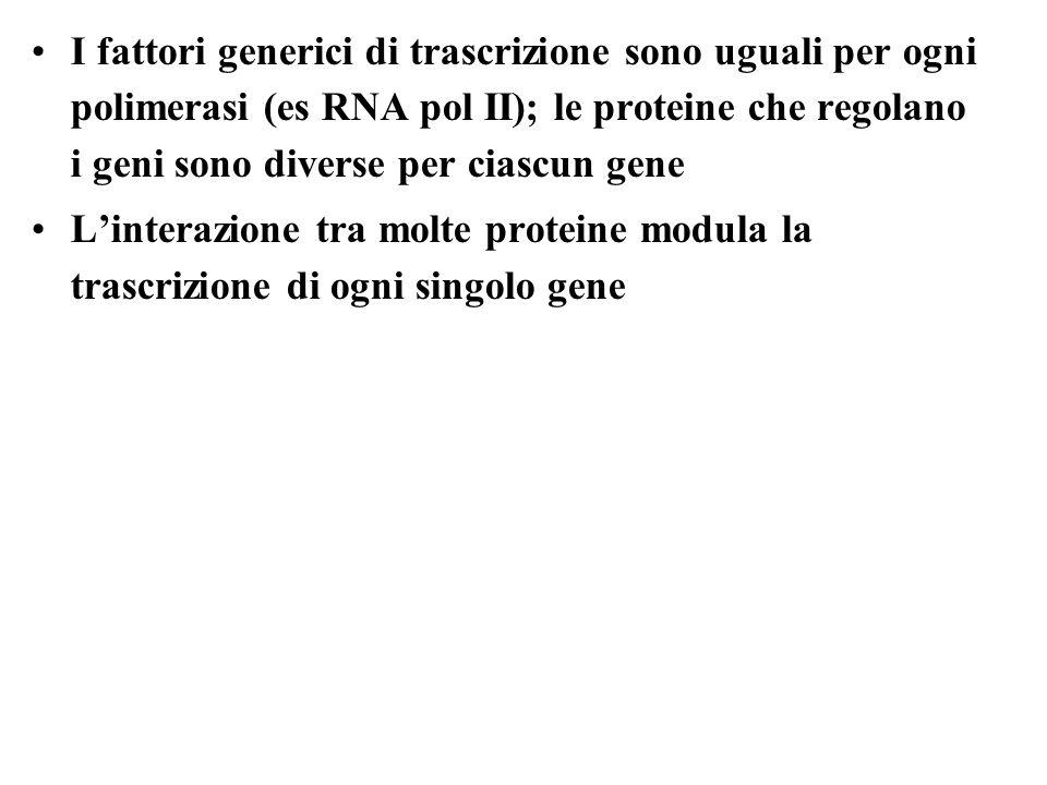 I fattori generici di trascrizione sono uguali per ogni polimerasi (es RNA pol II); le proteine che regolano i geni sono diverse per ciascun gene