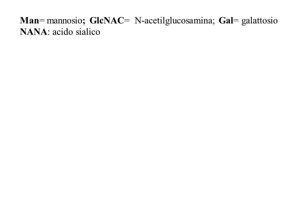 Man= mannosio; GlcNAC= N-acetilglucosamina; Gal= galattosio
