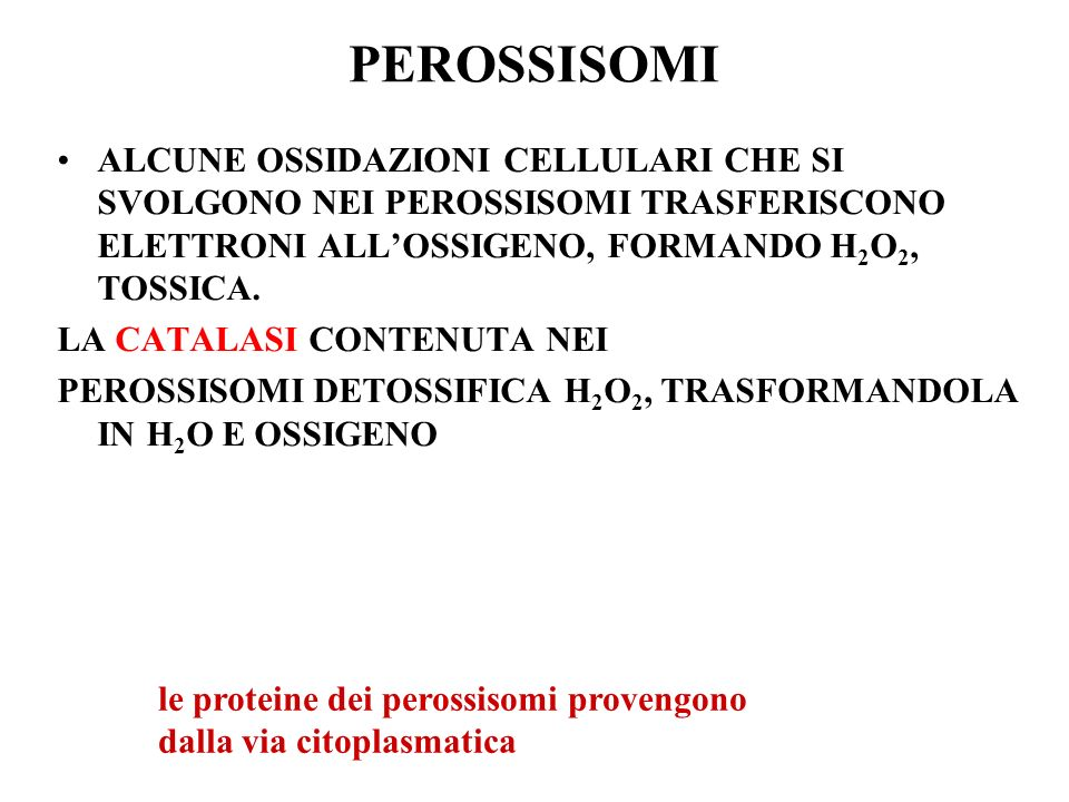 PEROSSISOMI ALCUNE OSSIDAZIONI CELLULARI CHE SI SVOLGONO NEI PEROSSISOMI TRASFERISCONO ELETTRONI ALL'OSSIGENO, FORMANDO H2O2, TOSSICA.