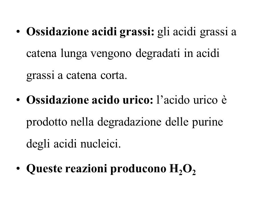 Ossidazione acidi grassi: gli acidi grassi a catena lunga vengono degradati in acidi grassi a catena corta.