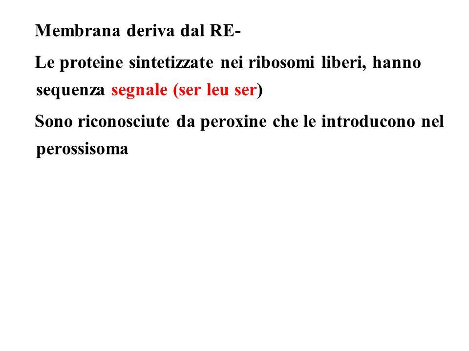 Membrana deriva dal RE-