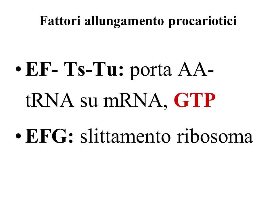 Fattori allungamento procariotici