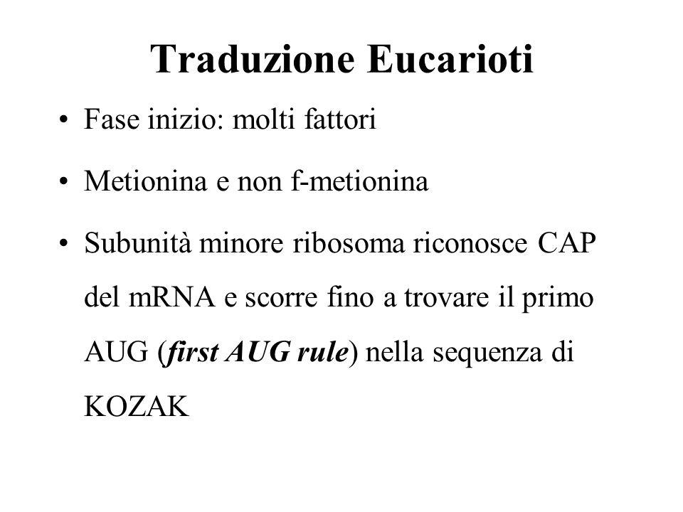 Traduzione Eucarioti Fase inizio: molti fattori