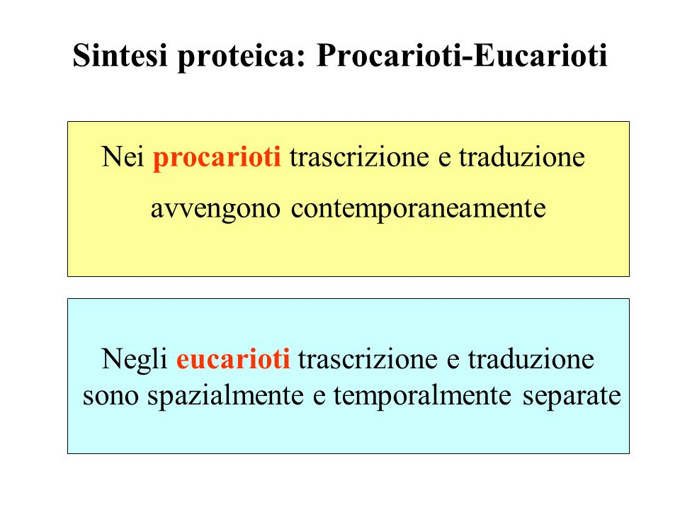 Sintesi proteica: Procarioti-Eucarioti