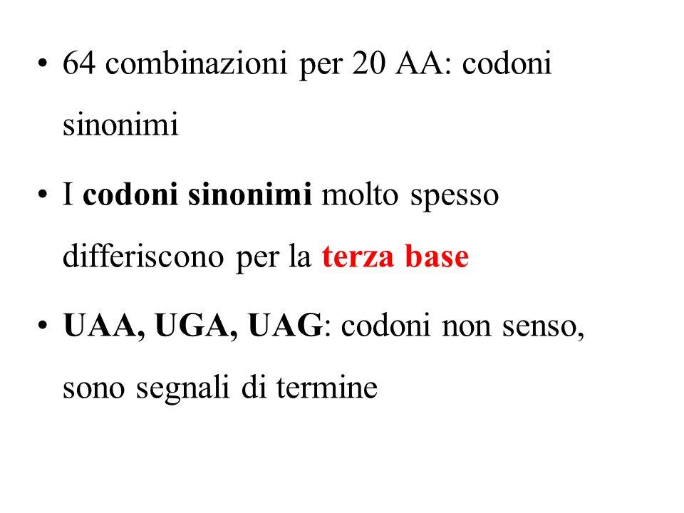 64 combinazioni per 20 AA: codoni sinonimi