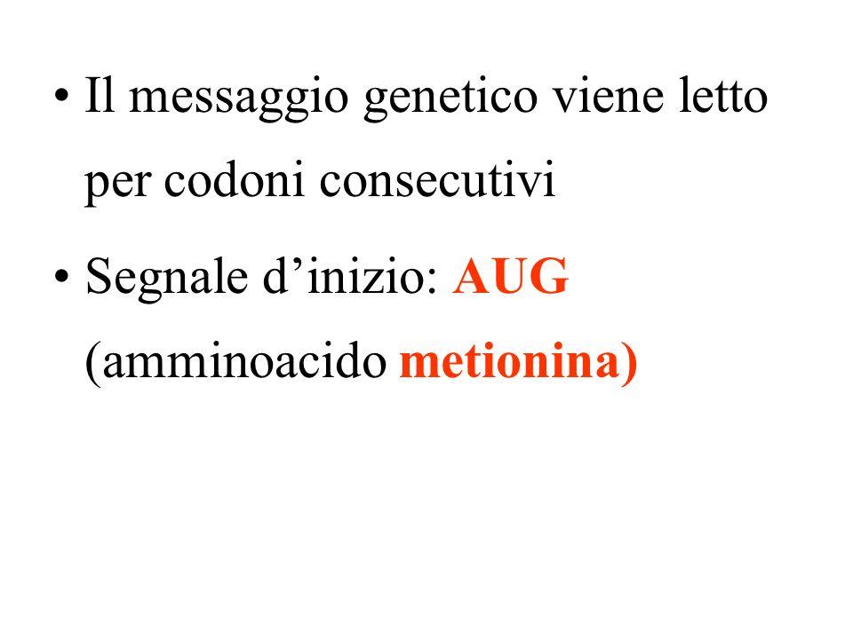 Il messaggio genetico viene letto per codoni consecutivi