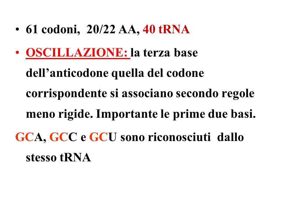 61 codoni, 20/22 AA, 40 tRNA