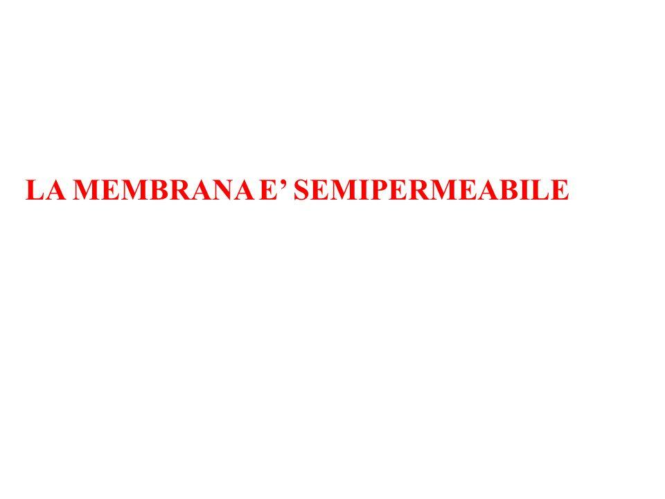 LA MEMBRANA E' SEMIPERMEABILE