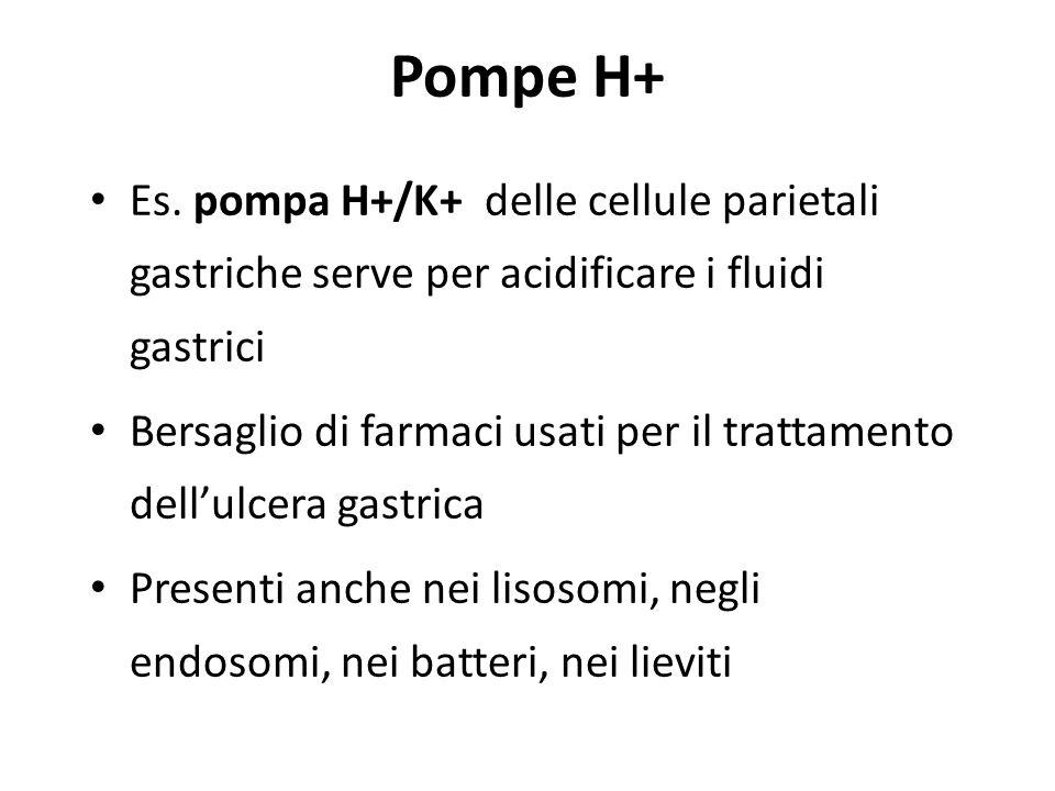 Pompe H+ Es. pompa H+/K+ delle cellule parietali gastriche serve per acidificare i fluidi gastrici.