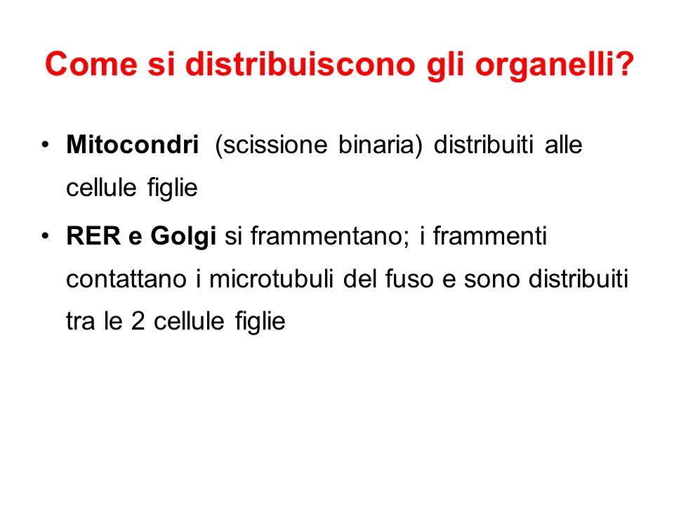 Come si distribuiscono gli organelli