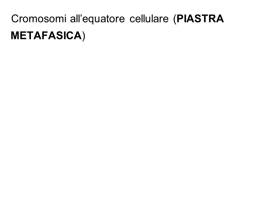 Cromosomi all'equatore cellulare (PIASTRA METAFASICA)