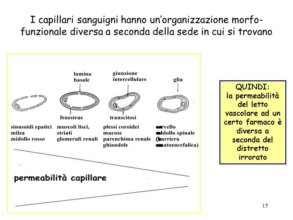 I capillari sanguigni hanno un'organizzazione morfo-funzionale diversa a seconda della sede in cui si trovano