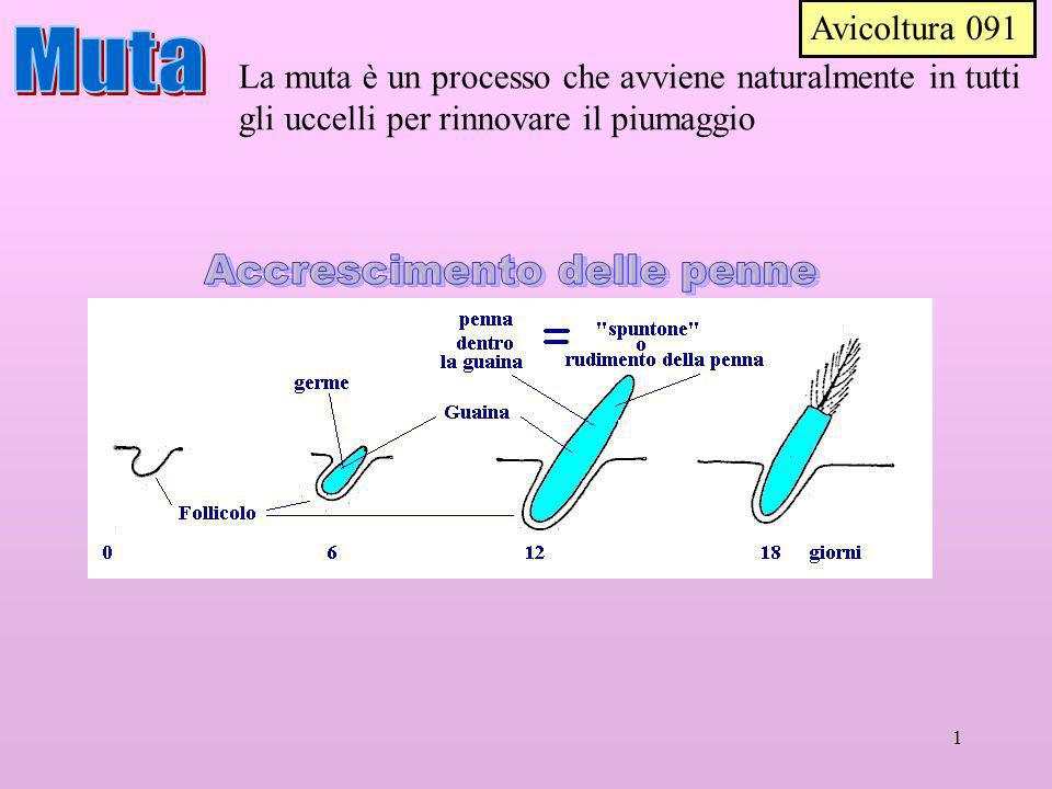 Accrescimento delle penne