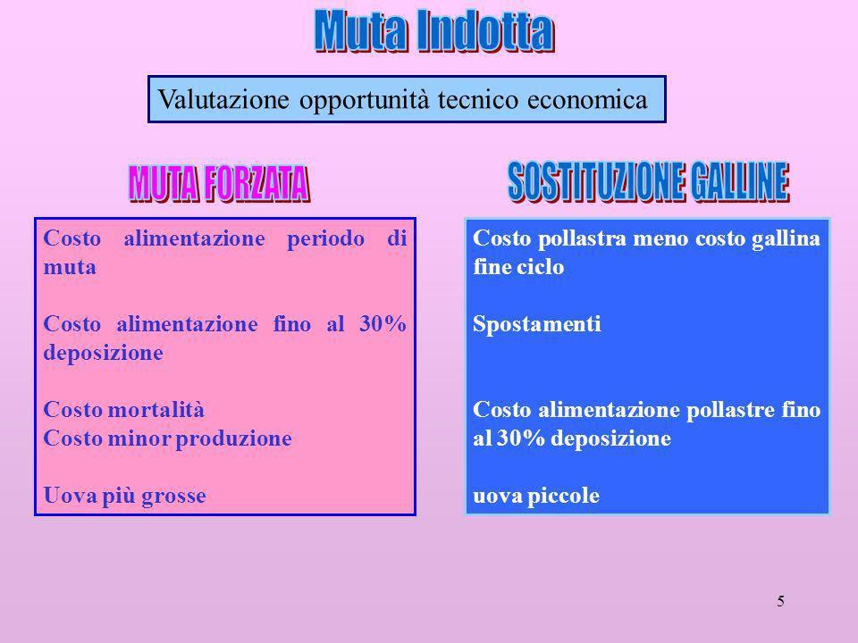 Muta Indotta SOSTITUZIONE GALLINE MUTA FORZATA