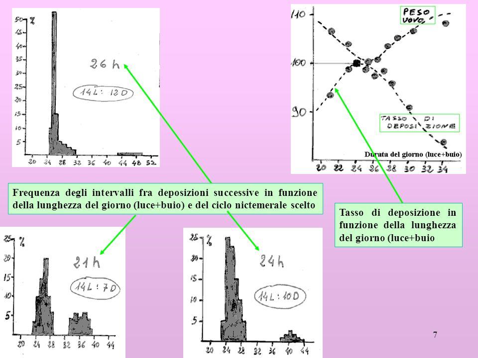 Frequenza degli intervalli fra deposizioni successive in funzione della lunghezza del giorno (luce+buio) e del ciclo nictemerale scelto