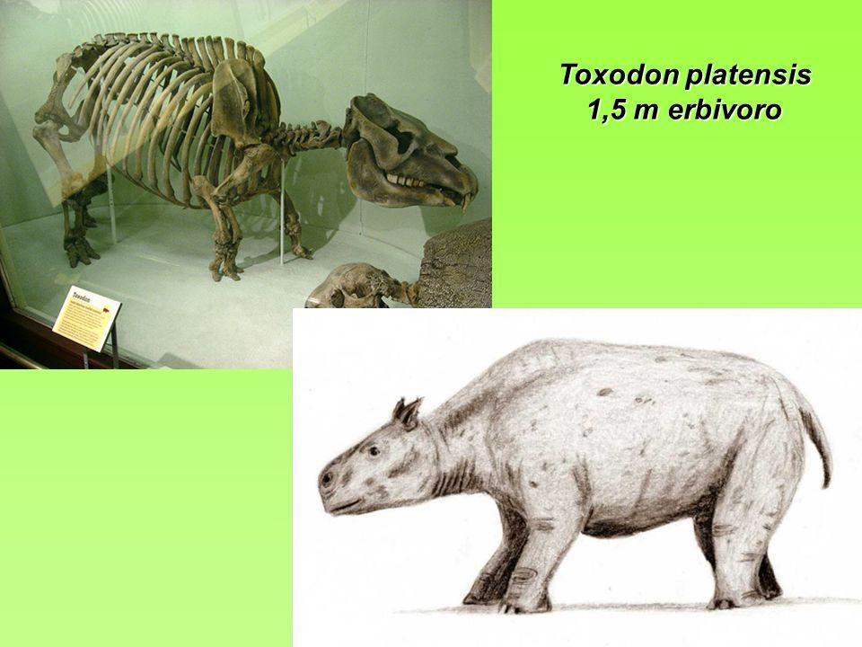 Toxodon platensis 1,5 m erbivoro