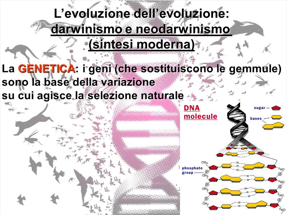 L'evoluzione dell'evoluzione: darwinismo e neodarwinismo
