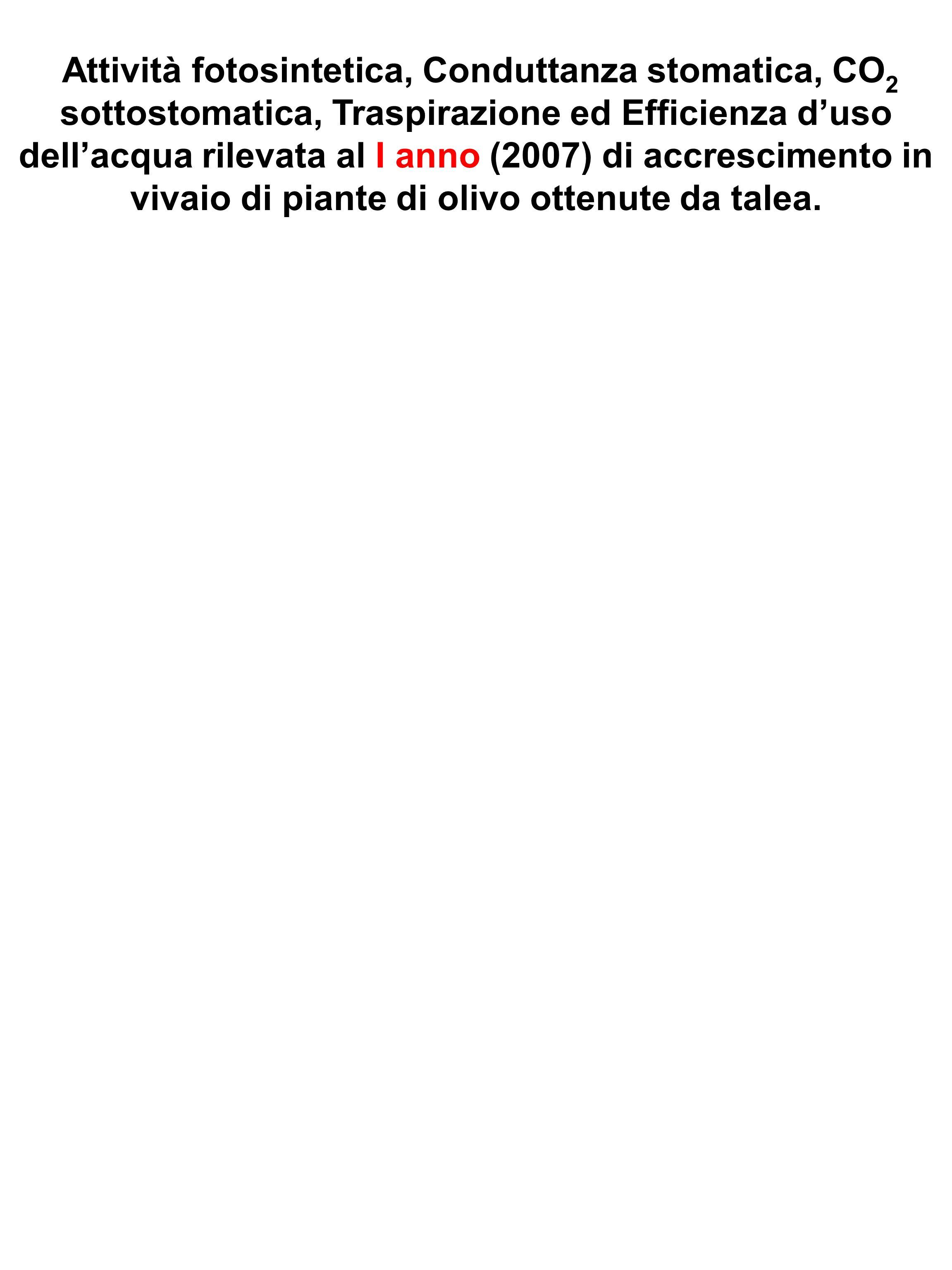 Attività fotosintetica, Conduttanza stomatica, CO2 sottostomatica, Traspirazione ed Efficienza d'uso dell'acqua rilevata al I anno (2007) di accrescimento in vivaio di piante di olivo ottenute da talea.