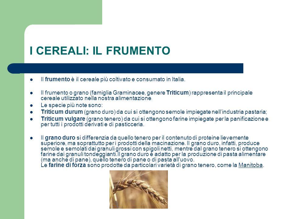 I CEREALI: IL FRUMENTO Il frumento è il cereale più coltivato e consumato in Italia.