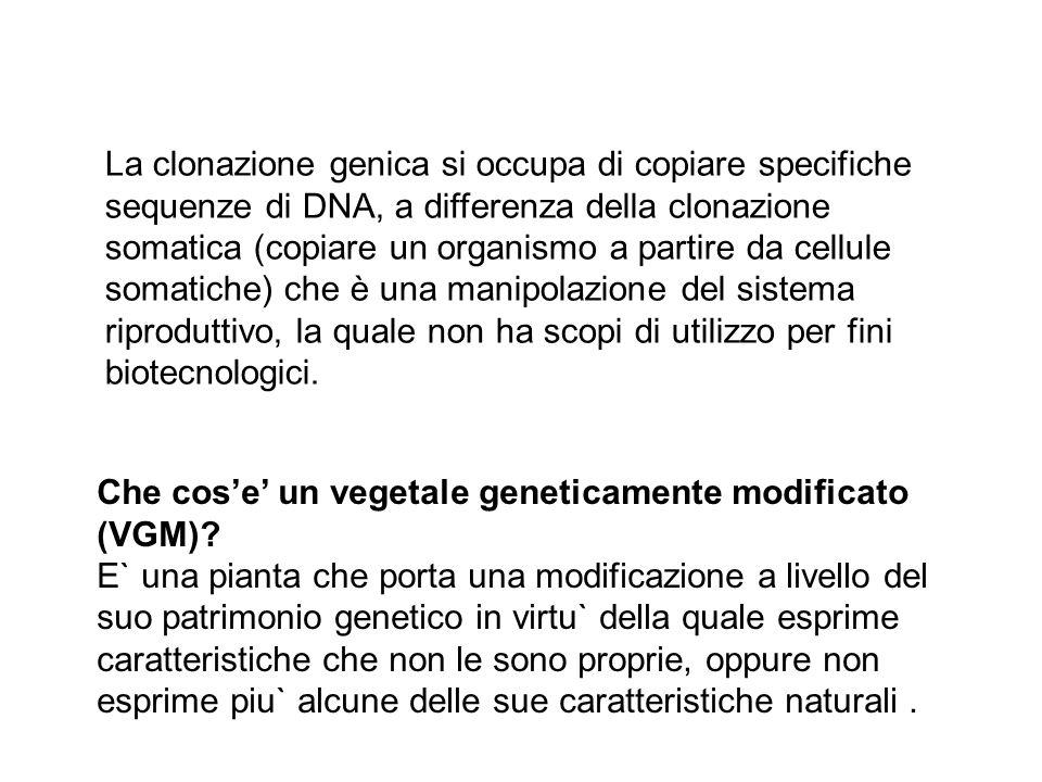 La clonazione genica si occupa di copiare specifiche sequenze di DNA, a differenza della clonazione somatica (copiare un organismo a partire da cellule somatiche) che è una manipolazione del sistema riproduttivo, la quale non ha scopi di utilizzo per fini biotecnologici.