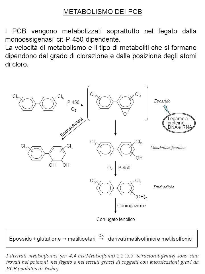 METABOLISMO DEI PCB I PCB vengono metabolizzati soprattutto nel fegato dalla monoossigenasi cit-P-450 dipendente.