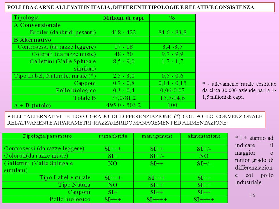 POLLI DA CARNE ALLEVATI IN ITALIA, DIFFERENTI TIPOLOGIE E RELATIVE CONSISTENZA