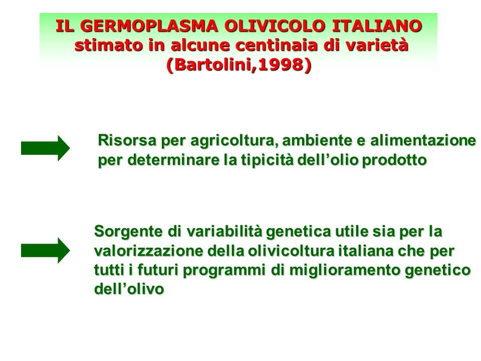 IL GERMOPLASMA OLIVICOLO ITALIANO