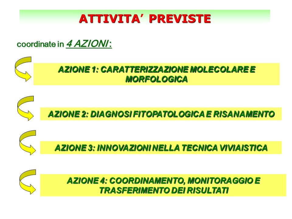 ATTIVITA' PREVISTE coordinate in 4 AZIONI :