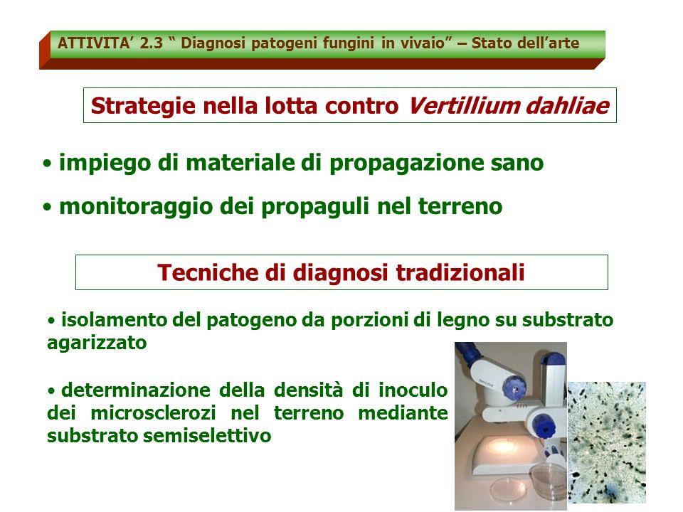 Strategie nella lotta contro Vertillium dahliae