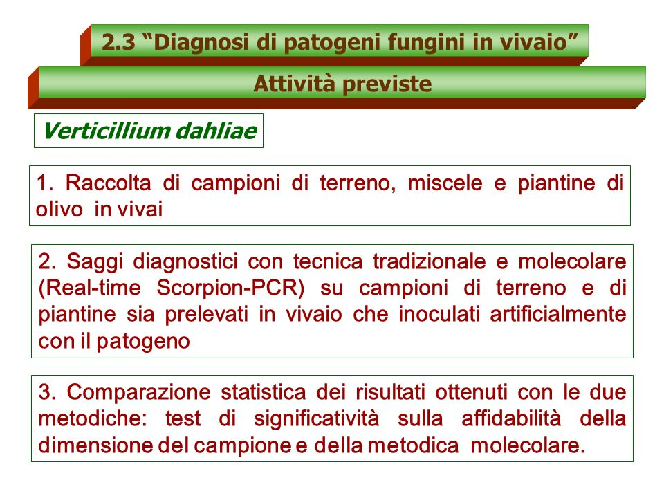 2.3 Diagnosi di patogeni fungini in vivaio