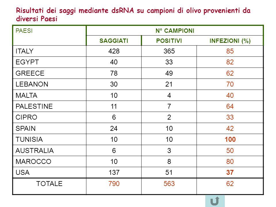 Risultati dei saggi mediante dsRNA su campioni di olivo provenienti da diversi Paesi