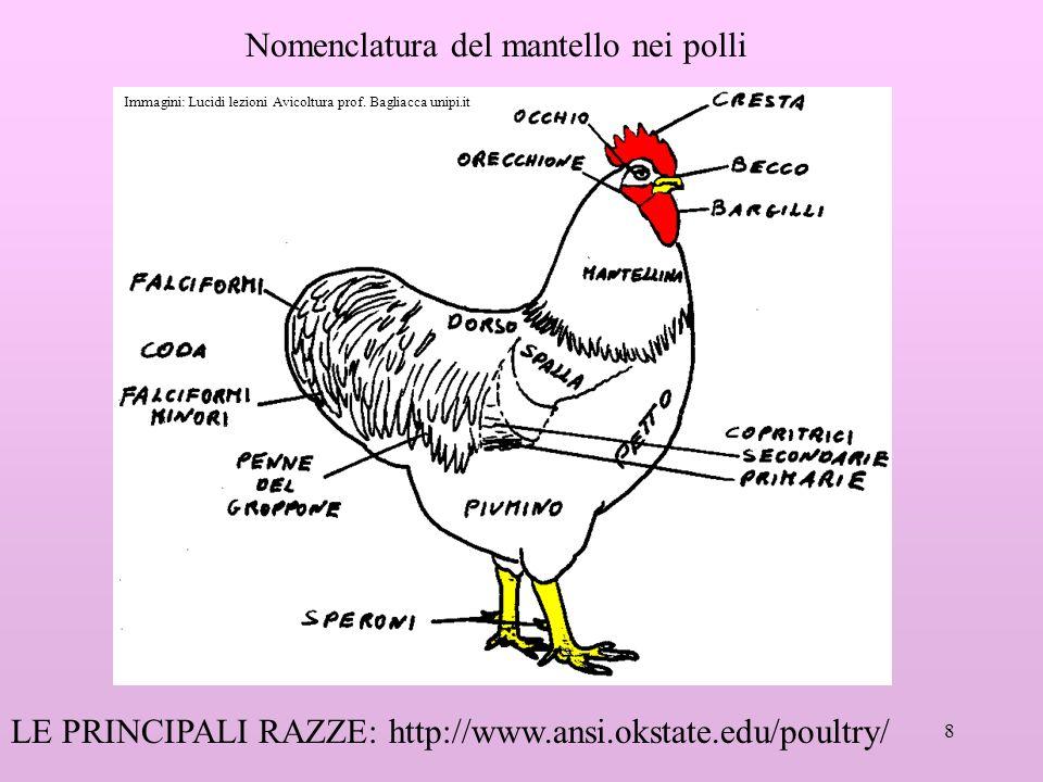 Nomenclatura del mantello nei polli