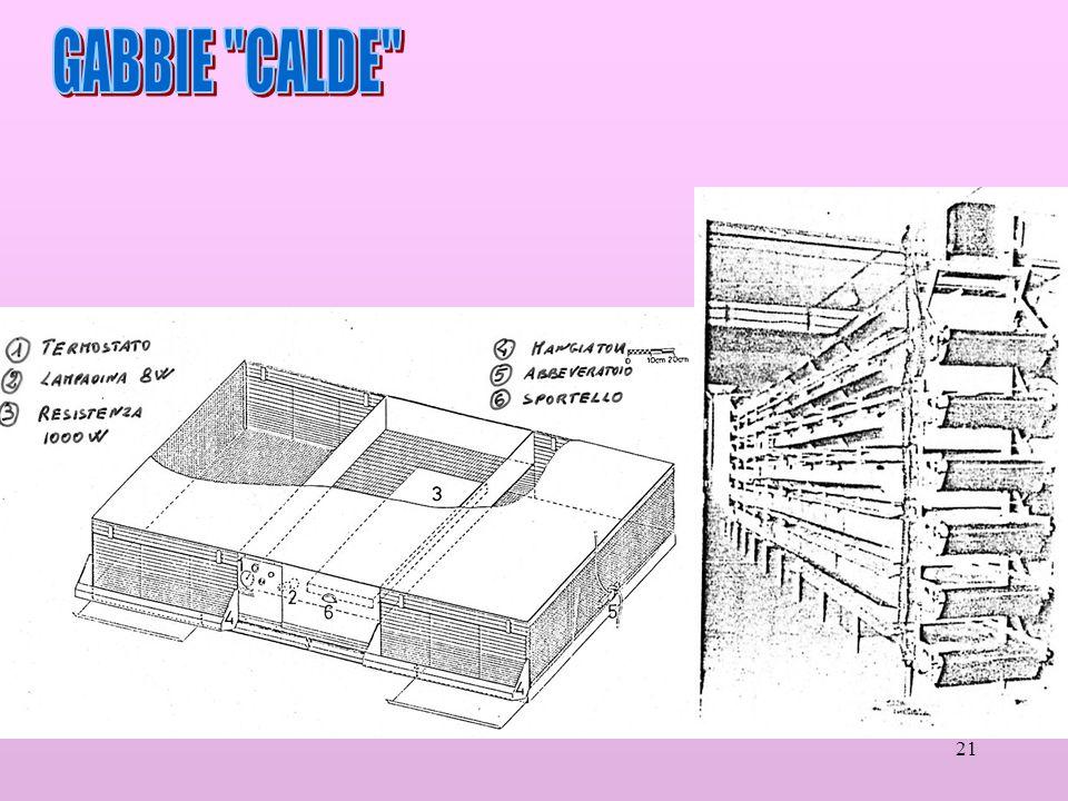 GABBIE CALDE