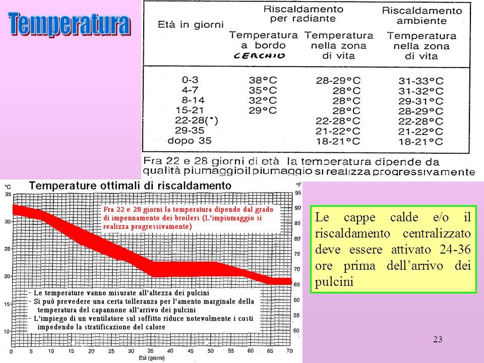 Temperatura Le cappe calde e/o il riscaldamento centralizzato deve essere attivato 24-36 ore prima dell'arrivo dei pulcini.