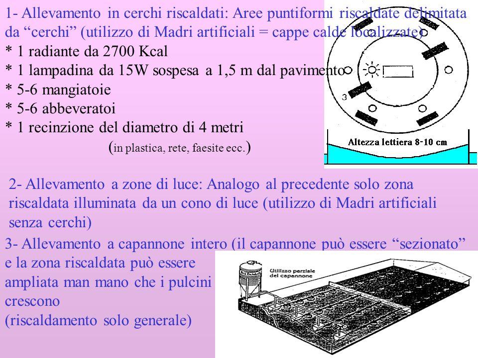 1- Allevamento in cerchi riscaldati: Aree puntiformi riscaldate delimitata da cerchi (utilizzo di Madri artificiali = cappe calde localizzate)