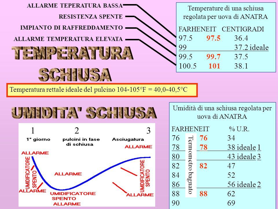 TEMPERATURA SCHIUSA UMIDITA SCHIUSA 1 2 3 97.5 97.5 36.4