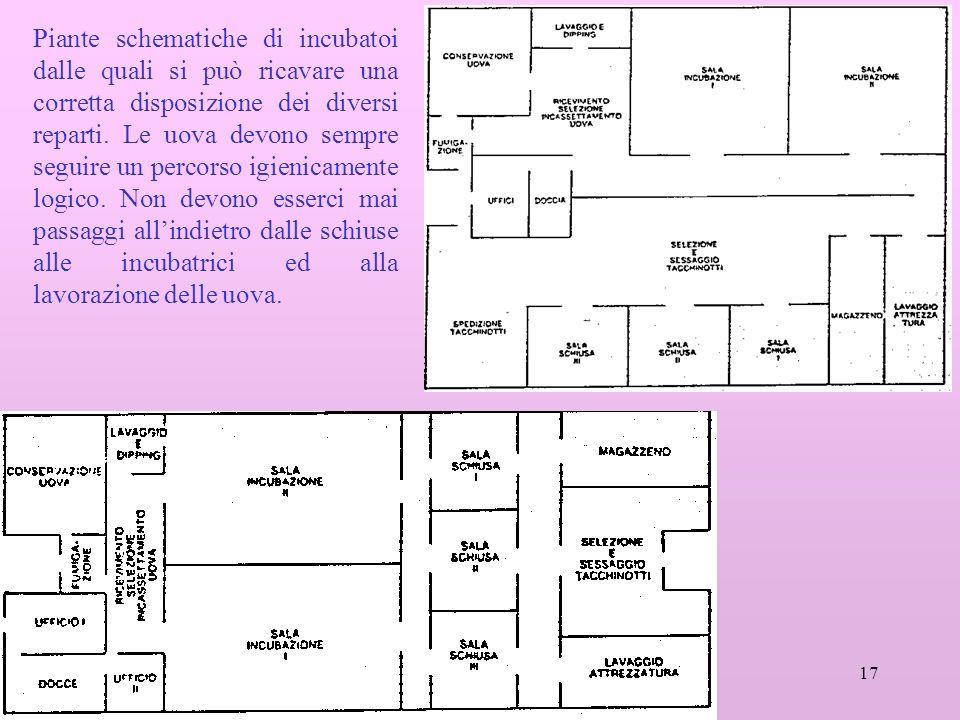 Piante schematiche di incubatoi dalle quali si può ricavare una corretta disposizione dei diversi reparti.