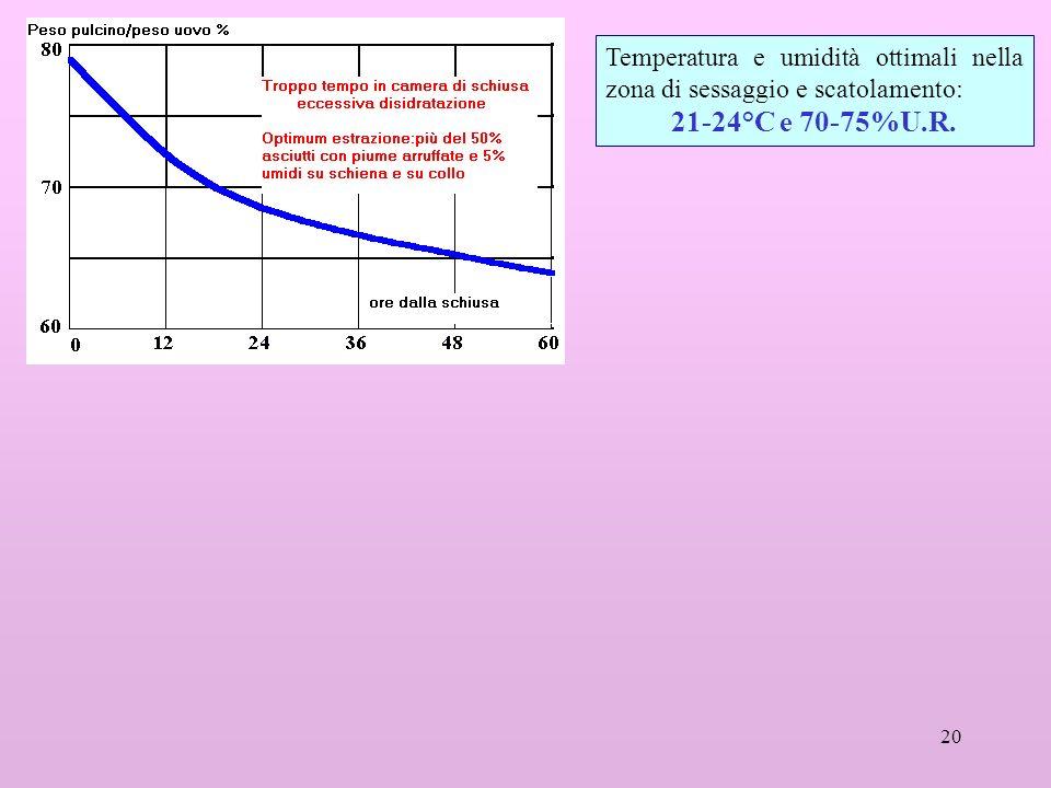 Temperatura e umidità ottimali nella zona di sessaggio e scatolamento: