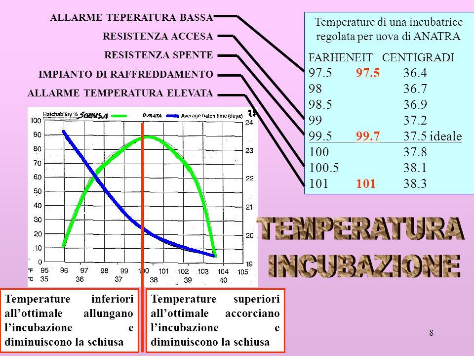 Temperature di una incubatrice regolata per uova di ANATRA