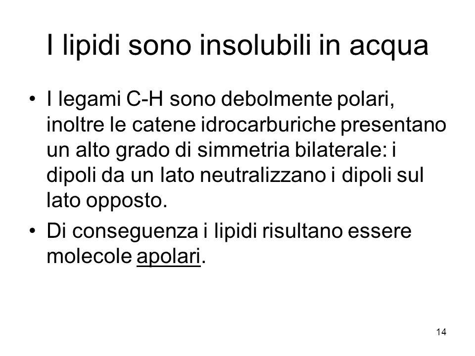 I lipidi sono insolubili in acqua
