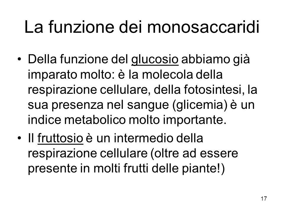 La funzione dei monosaccaridi